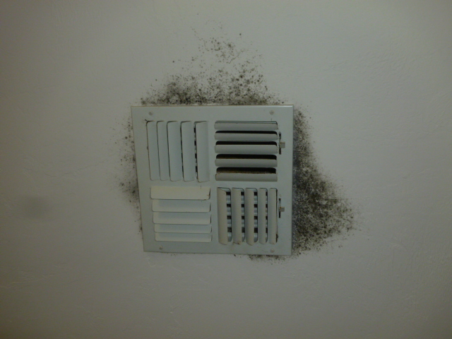 Hvac Mold Problem In Naples